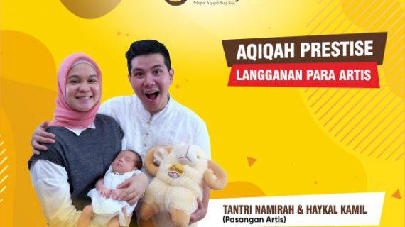 Rekomendasi Domba Aqiqah Murah Bandung
